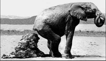 Fil dışkısı altında kaldı Bir fil bakıcısı filin temizliği ile ilgilenirken filin dışkısı altında kalıp can verdi.