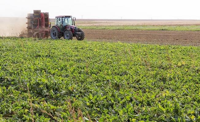 Türkiye son 10 yılda tarım alanlarının yüzde 8,2'sini kaybetti