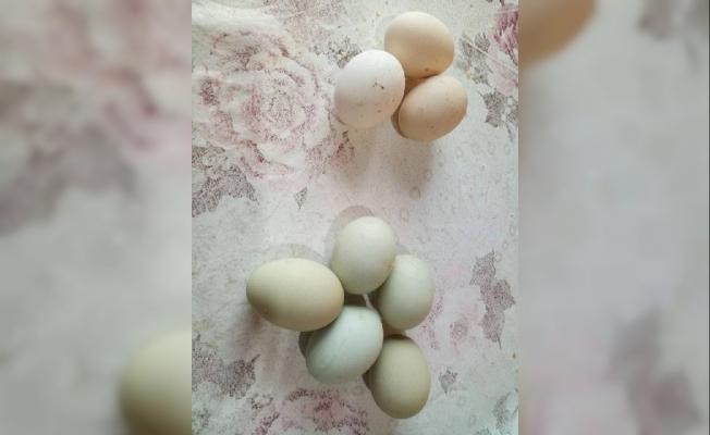 Değerini öğrenince yeşil yumurtlayan tavuğunu kesmekten vazgeçti