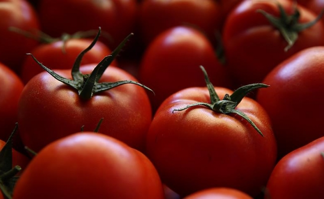 Rusya Tarım Bakanı Tkaçev: Türkiye'den domates ithal etmeye hazır değiliz