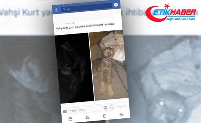 Sosyal medyadan kurt yavrusu satışına ceza verildi