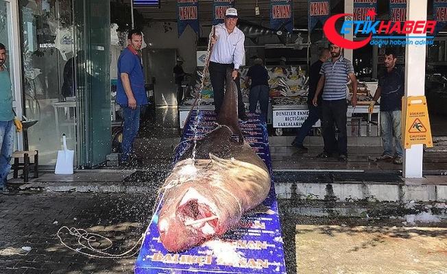 Marmara Denizi'nde 1,2 tonluk köpek balığı yakalandı