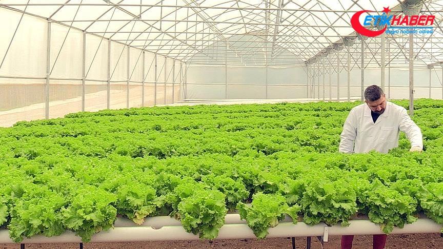 Fındık bahçesini topraksız tarım serasına dönüştürdü