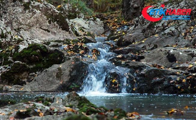 Istranca Ormanlarında sonbahar güzelliği