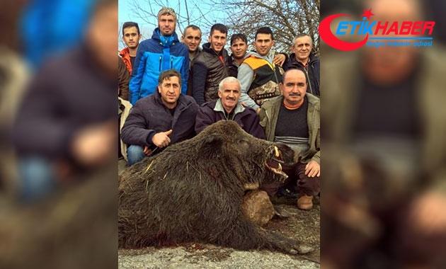 Vurdukları 300 kiloluk domuzla hatıra fotoğrafı çekildiler