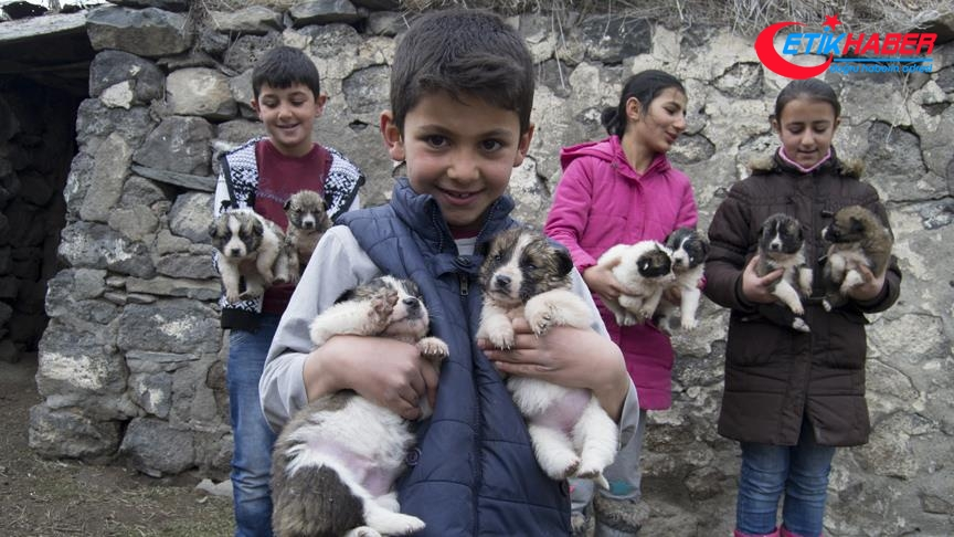 'Minik yürekler' yavru köpekleri sahiplendi