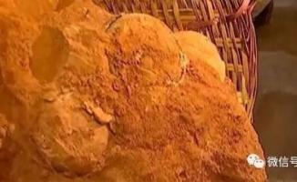 Çin'de 70 milyon yıllık dinozor yumurta fosili bulundu