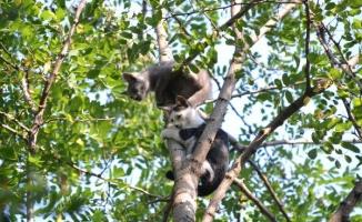 Köpekten korkup çıktıkları ağaçta mahsur kalan yavru kediler kurtarıldı