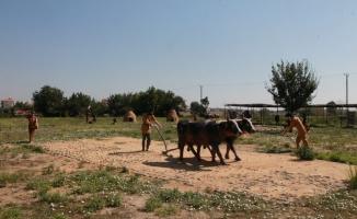 Avrupa'ya örnek olan tarım uygulamaları Kırklareli'nde sergileniyor