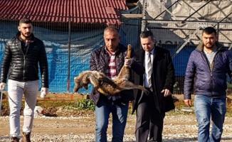 Bursa'da yavru tilkiyi, kuyruğunu kesip, ayaklarından tellere astılar