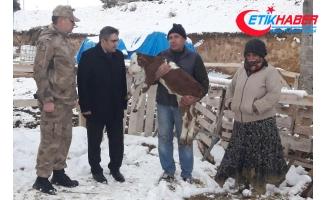 Çalınan 5 ineği, 2 buzağıyla teslim edildi