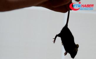 Satın almak istediği uyku tulumundan fareler çıktı