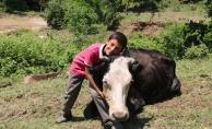 Kocaeli'de bataklığa saplanan inek kurtarıldı
