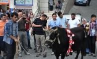 Şampiyon boğalar Artvin caddelerinde yürüdü