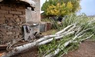 Muş'ta devrilen ağaçların altında kalan kadın öldü