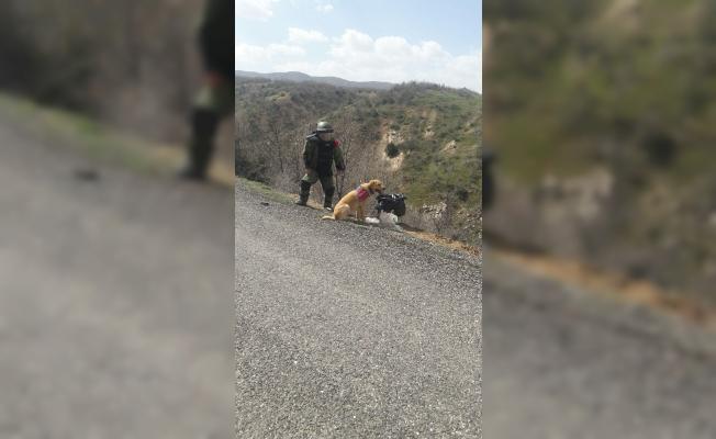 Bingöl'de yola tuzaklanan patlayıcı imha edildi