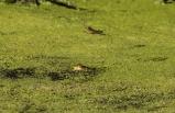 Kızılırmak Deltası Kuş Cenneti'nde pek çok canlı türü görüntülenebiliyor