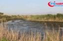 Söke'deki ölü balıklar Ege Denizi'ne ulaştı