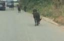 Otlamaya giden büyükbaş hayvanlara ipli işkenceye...