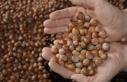 Fındık üreticisine 'gelir desteği' uyarısı
