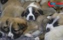 Bakan Pakdemirli: Hayvanlara yönelik şiddet suç...