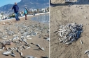 Alanya'da sahile ölü gümüş balıkları vurdu