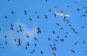 İstanbul hava sahasında göç alarmı verildi