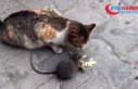 Açlık kedi ile fareyi bile dost etti
