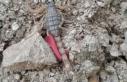 Nazilli'de en zehirli akrep türü görüldü
