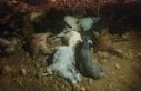Adıyaman'da 70 keçi telef oldu