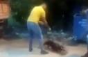 Kan donduran görüntü! Köpeğine, sokak kedisini...