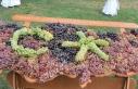 Milli Koleksiyon Bağı'nda 1439 yerli üzüm...