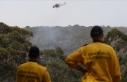 Yangınlar Avustralya'daki ormanların yüzde 21'ini...