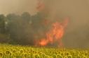 Çanakkale'deki poyraz orman yangınına müdahaleyi...