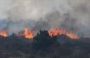 Orman yangınları yaban hayatını da 'tüketiyor'