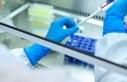 Çin'de somatik hücre nükleer transfer yöntemiyle...