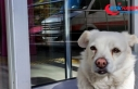 Sahibi tedavi gören köpek 5 gündür hastane kapısında...