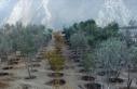 Yusufeli yeni yerleşim yerine taşınan 15 bin ağaç...