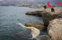 İskenderun Körfezi'nde görülen 12 metre uzunluğundaki...