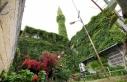 'Yeşil cami' baharda açan çiçekleri...