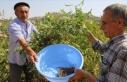 Türkiye'de sumak üretimi 8 yılda 5 kattan...