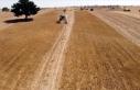 Atıl araziler çörek otu tarlasına dönüştü,...