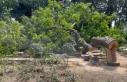 Edirnekapı Şehitliği'nde kesilen ağacın...