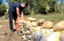 Pasinler Ovası'nda sertifikalı tohumla üretilen...