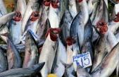'Denizin kırmızı etli balığı'na rağbet