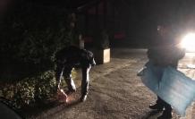 Almanya'da cami önüne domuz başı bırakıldı