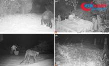 Afrika'da 100 yıl sonra siyah bir leopar görüntülendi