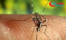 Ölümcül Batı Nil Virüsünün belirtilerini anlamak çok zor