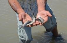 Murat Nehri'nde balık ölümleri endişelendirdi