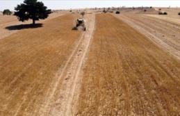 Tarım, ormancılık ve balıkçılıkta aktif büyüklük 10 yılda 5 katına çıktı